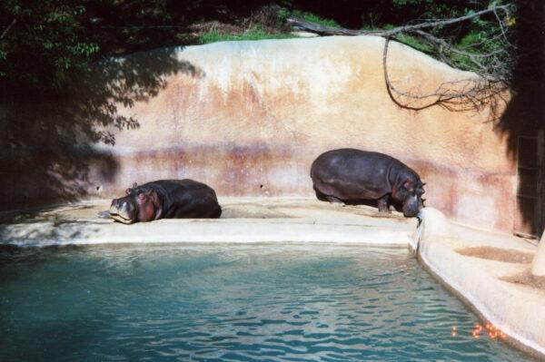 Калифорния. Часть 2. Зоопарк Сан-Диего.