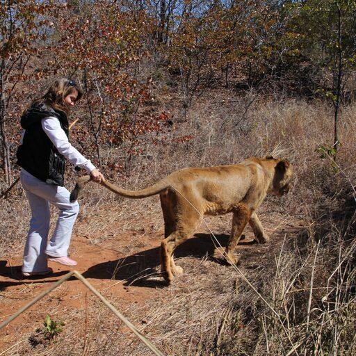 Прогулка со львами, или как ухватить судьбу за хвост!