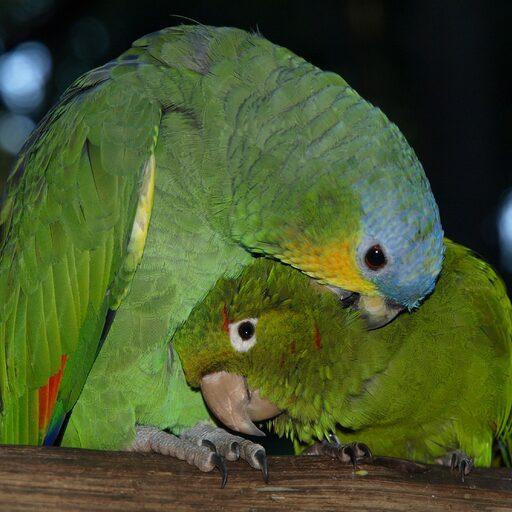 Парк птиц в Игуасу и ГЭС Итайпу