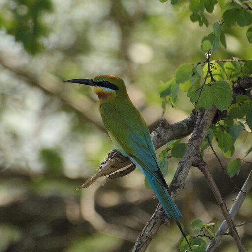Удавалаве-национальный парк