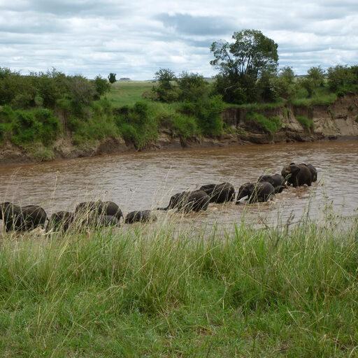 Кения Масаи Мара островок былого величия фауны