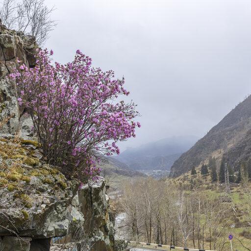 Когда горы становятся фиолетовыми
