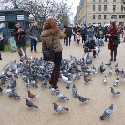 Париж предновогодний