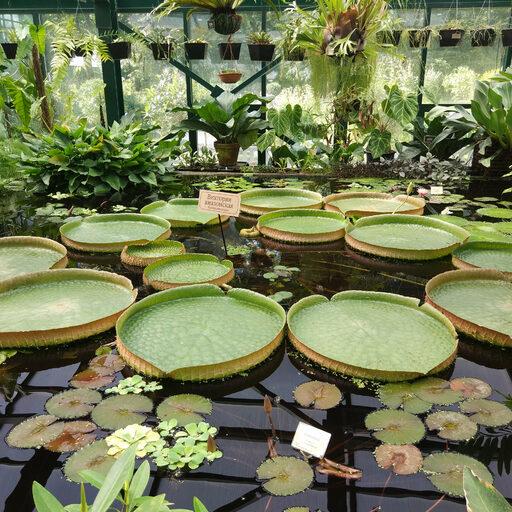 Ботанический сад. Аптекарский огород. продолжение