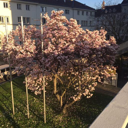Линц за 3 часа или Linz Donau Marathon 2017