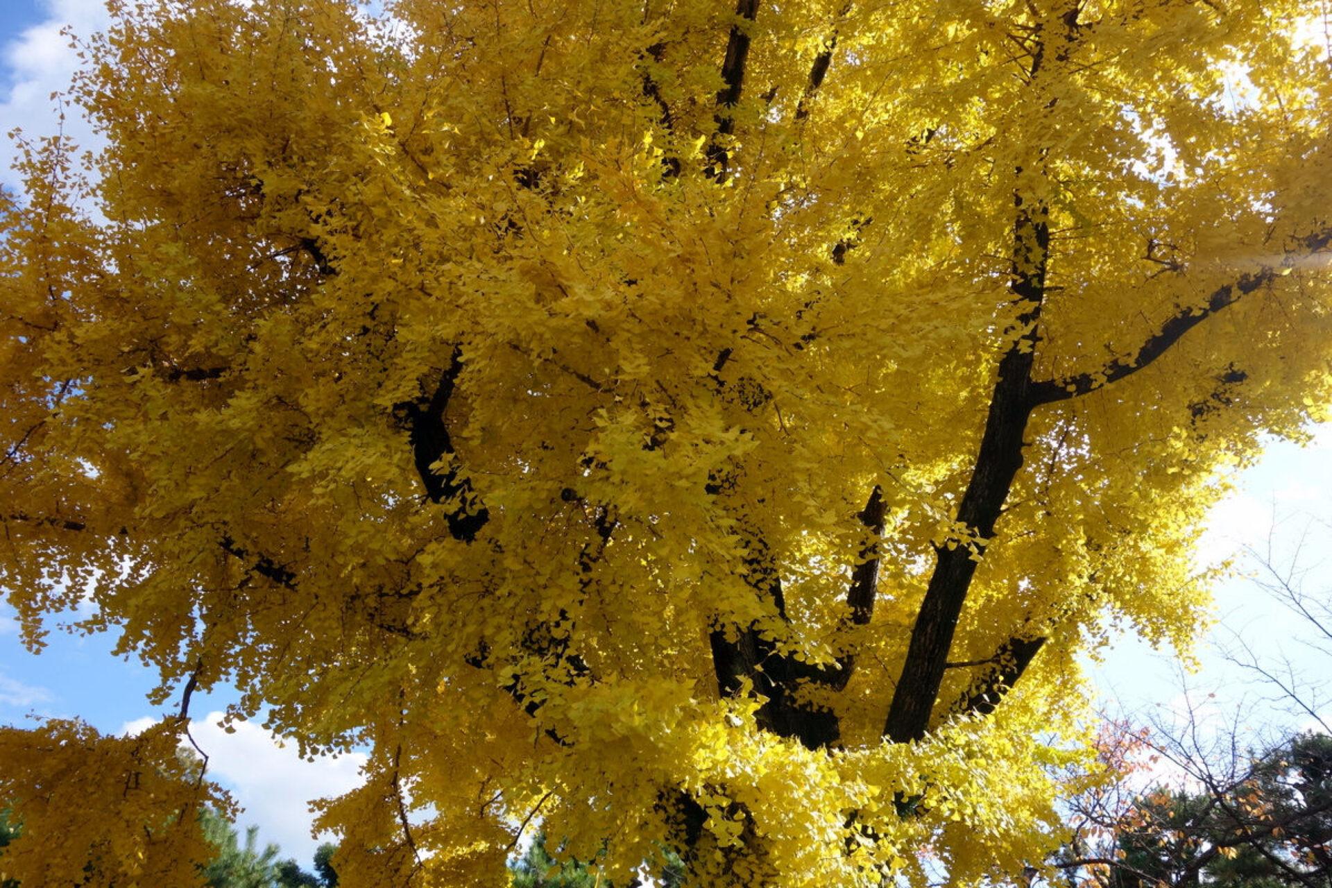 Почему вЯпонию надо ехать осенью