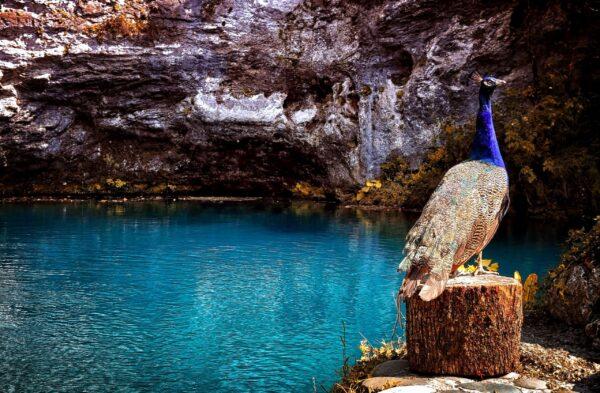 Пицунда иГолубое озеро