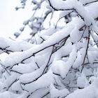 Настоящая зима вМоскве