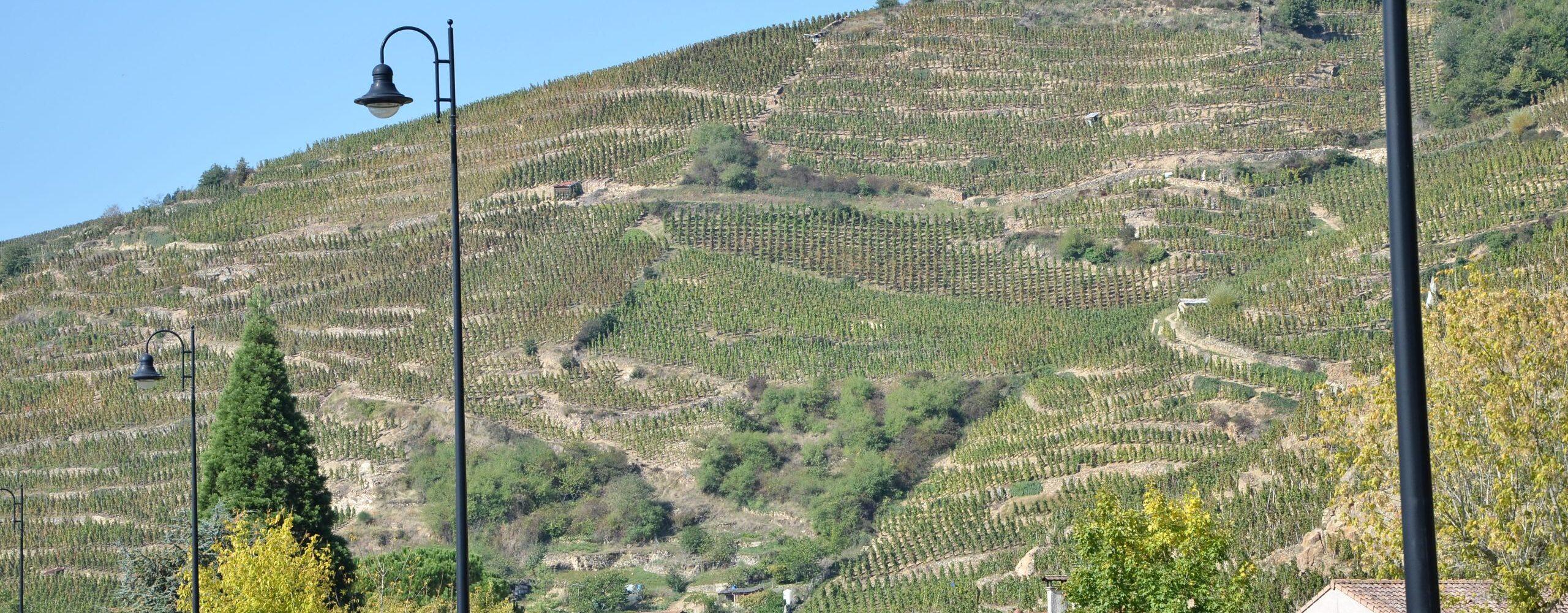 Верхняя Рона. Вино