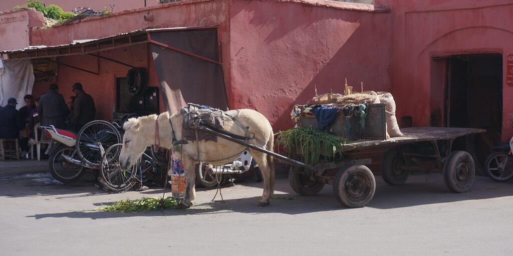 Мандариновое королевство Марокко!!! ЧАСТЬ 1: МАРРАКЕШ И ФЕС!!!