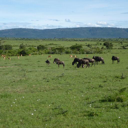 Кения — Масаи Мара — парк тысячи облаков
