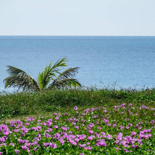 Пляж Карон Пхукет и окрестности. Отель WORABURI PHUKET RESORT & SPA