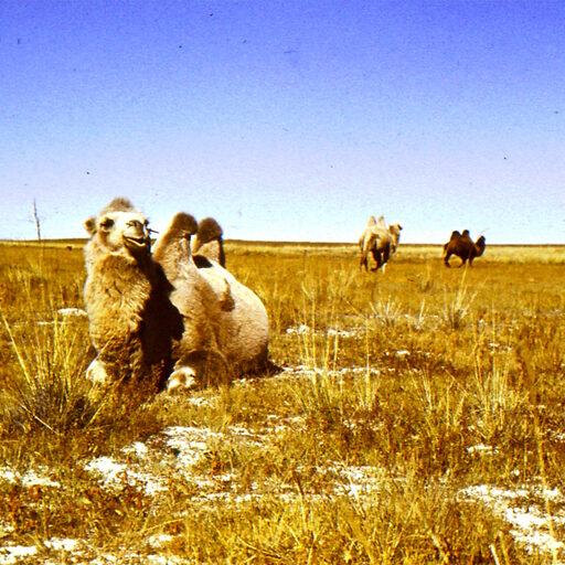 Монголия, слайды (1983 год)