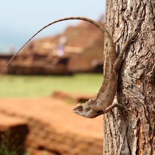 Шри Ланка. Сигирия.