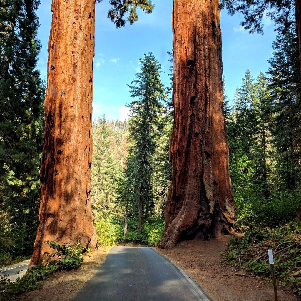 Kings Canyon & Sequoia Park