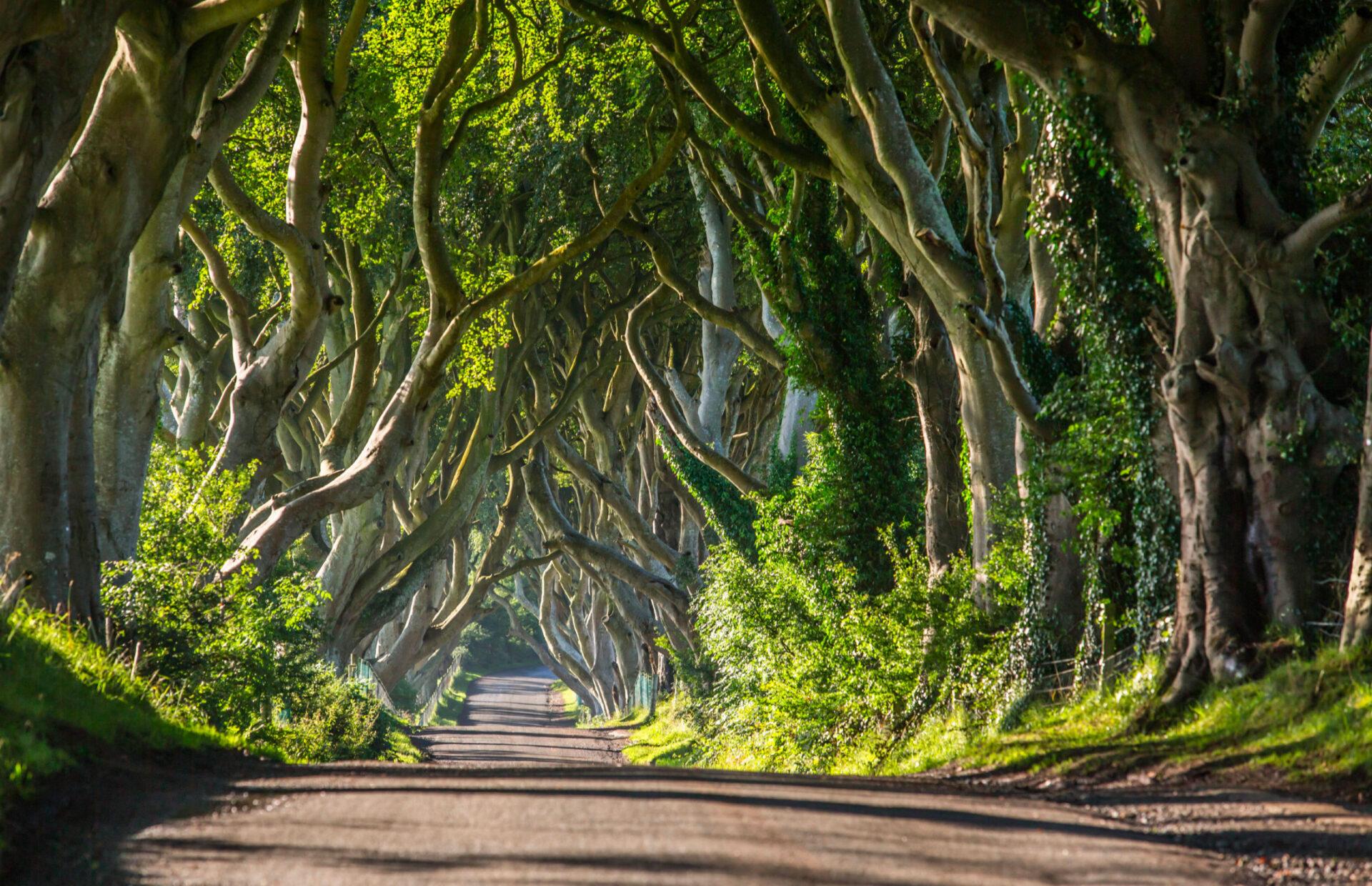 Навыходные вСеверную Ирландию