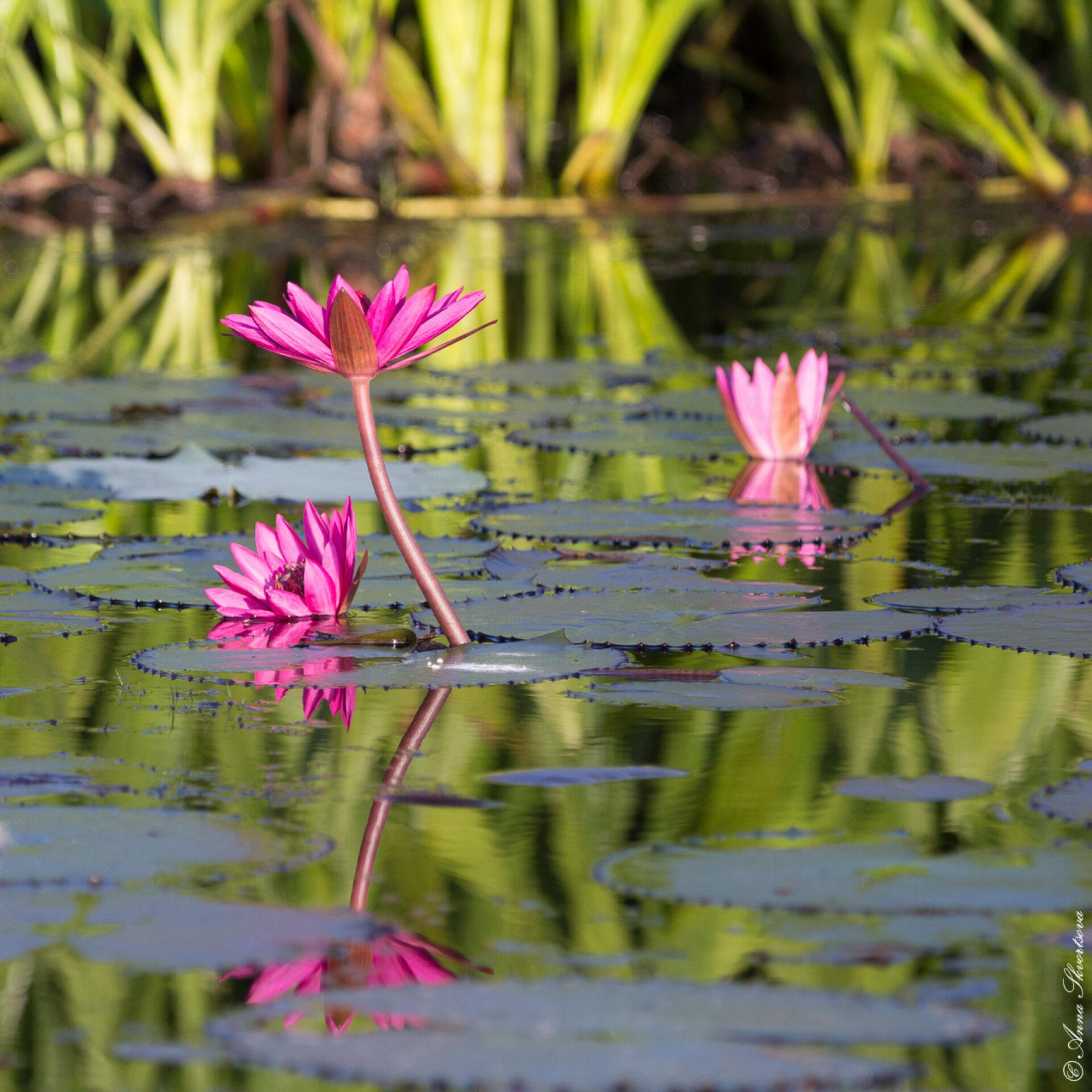 Розовый рассвет наозере Тале Ной