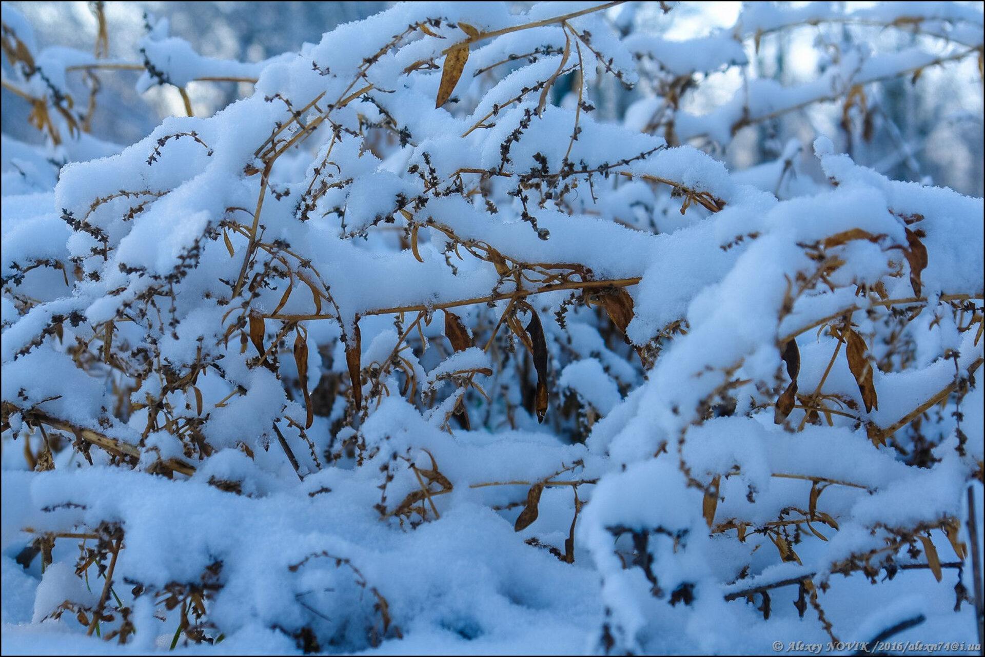 Фотопрогулки… Белый плен