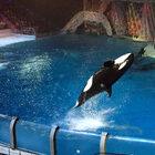 Москвариум-шоу «Сон влетнюю ночь»