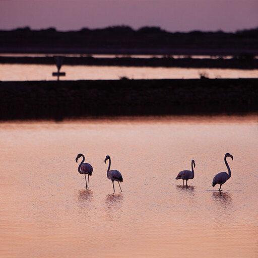 Розовые птицы…