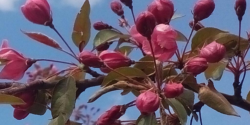 Красивая весна на станции Енисей