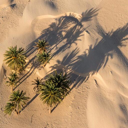 Тунис. Пустыня с мотодельтаплана.