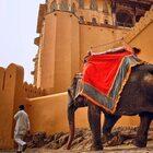 Джайпур иДворец Амбер
