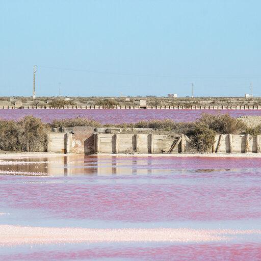 Франция: Розовый спектакль под стенами Эг-Морта