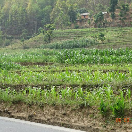 Животный и растительный мир Непала, как я его увидел.