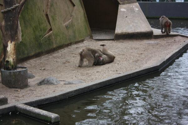 Амстердамский зоопарк— Zoo Artis
