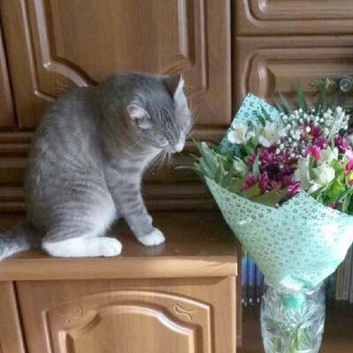 Когда у кота праздник?