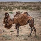 Урал-Памир 2017 (Часть 1) Казахстан
