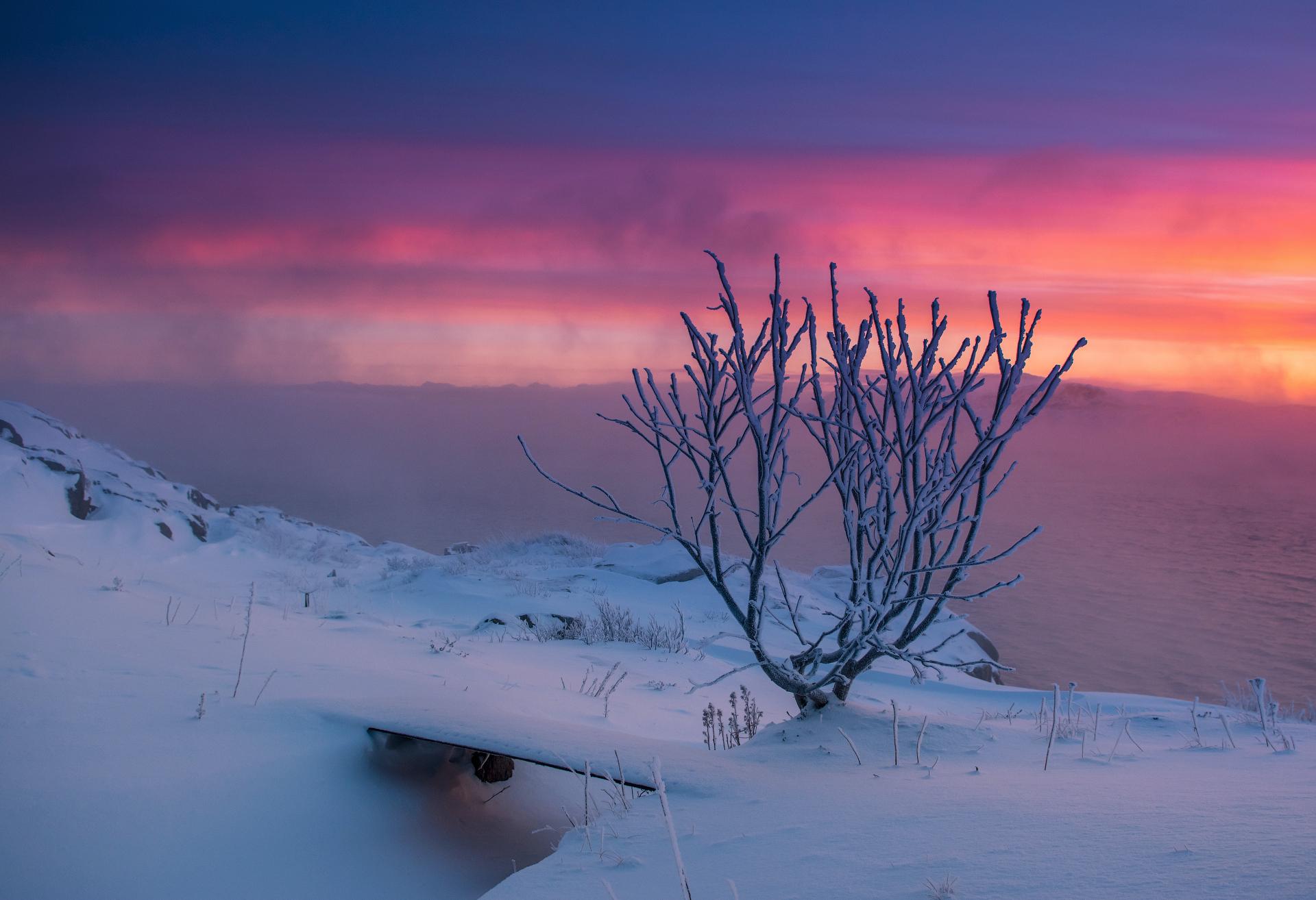 Мороз (Териберка)