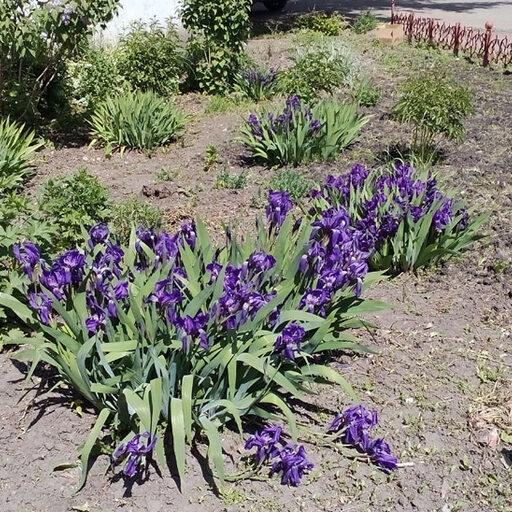 Цветочки во дворах на станции Енисей