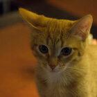 Котики илюди-антикафе.