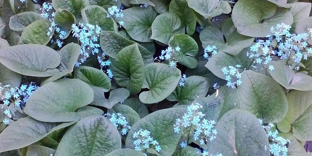 Цветочки во дворе на станции Енисей