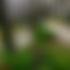 Парк вазербайджанской глубинке