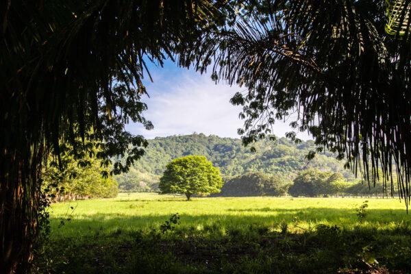 Коста-Рика. Жизнь, как она есть.