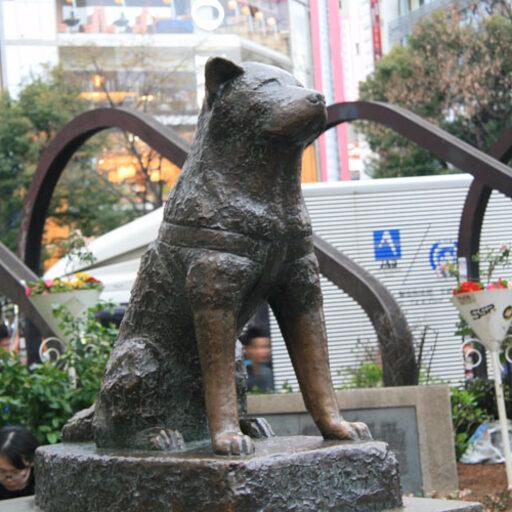 Легендарный пёс Хатико
