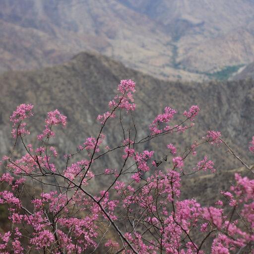 300 км по Перу. От Чачапояса до Кахамарки