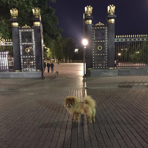Погуляем по ночной Москве…