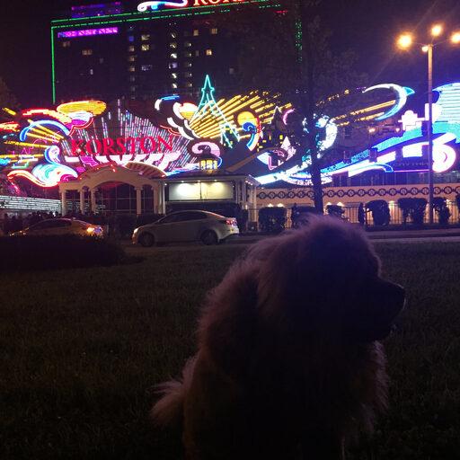 Москва — ночная жизнь