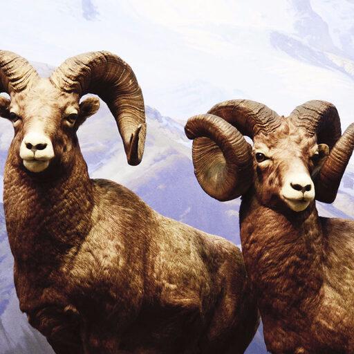 Немного о миллионах экспонатов: Американский музей естественной истории