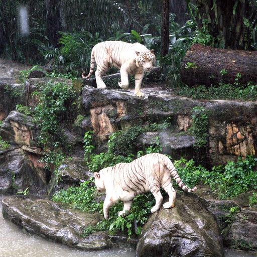 Прогулка по Singapore Zoo