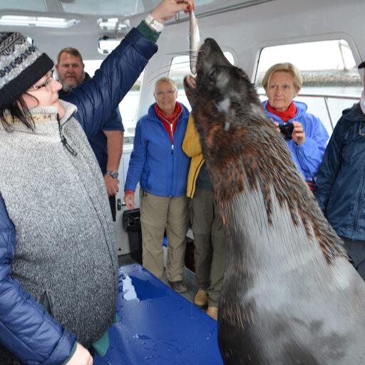Намибия. Бухта Китовая. А бухтят котики.