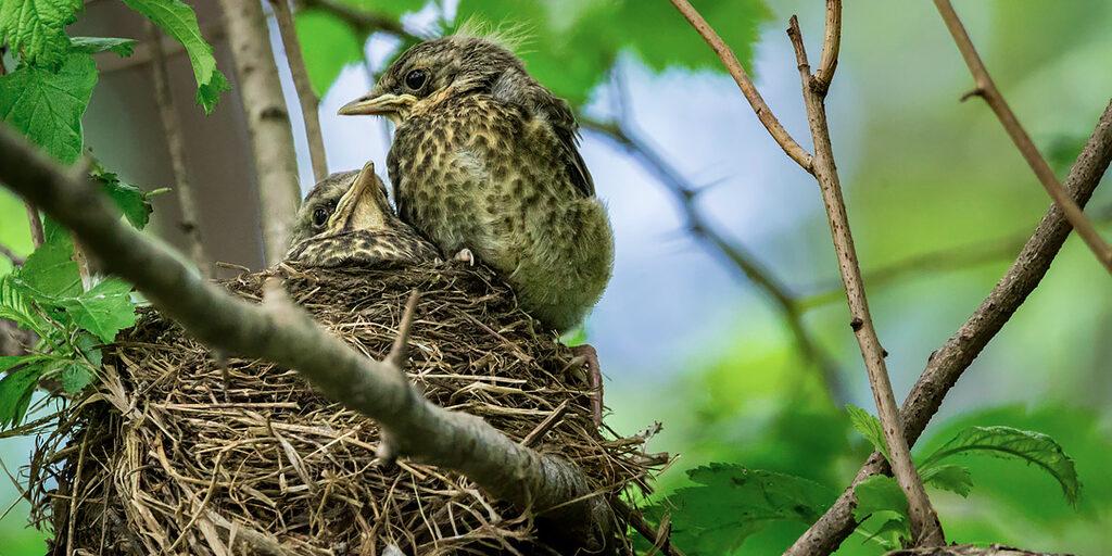 Жизнь в гнезде