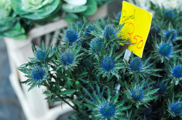 Еще немного про рынок цветов вКельне